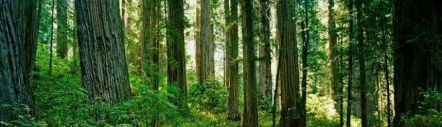 cropped-redwood-national-park.jpg
