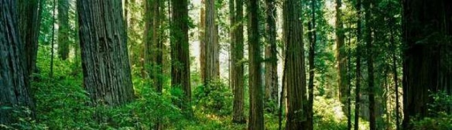 cropped-redwood-national-park.jpg