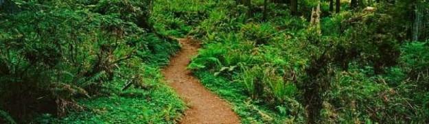 cropped-redwood-national-park1.jpg