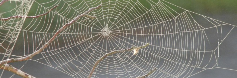 Spider_web_with_dew