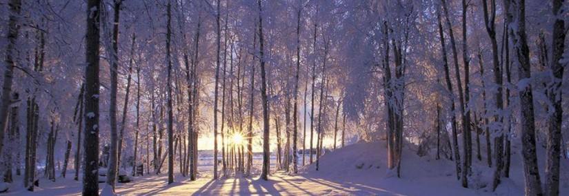 solstice sunrise woods